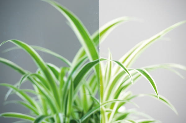 Verglasung für Weißlack Holzrahmentür Parsol Grau