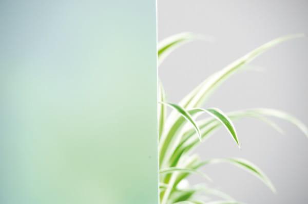 Verglasung für Weißlack Holzrahmentür Satinato