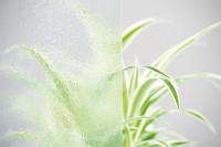 Verglasung für Weißlack Holzrahmentür Chinchilla Weiss
