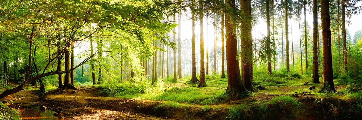 Klimaschutz, Nachhaltigkeit und Umweltschutz
